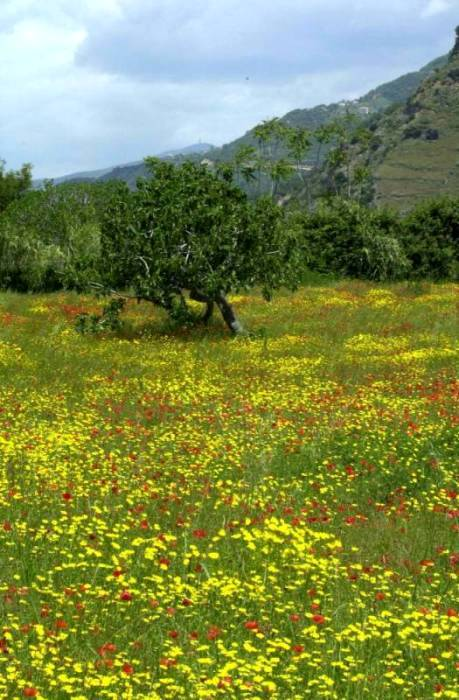 Paola field