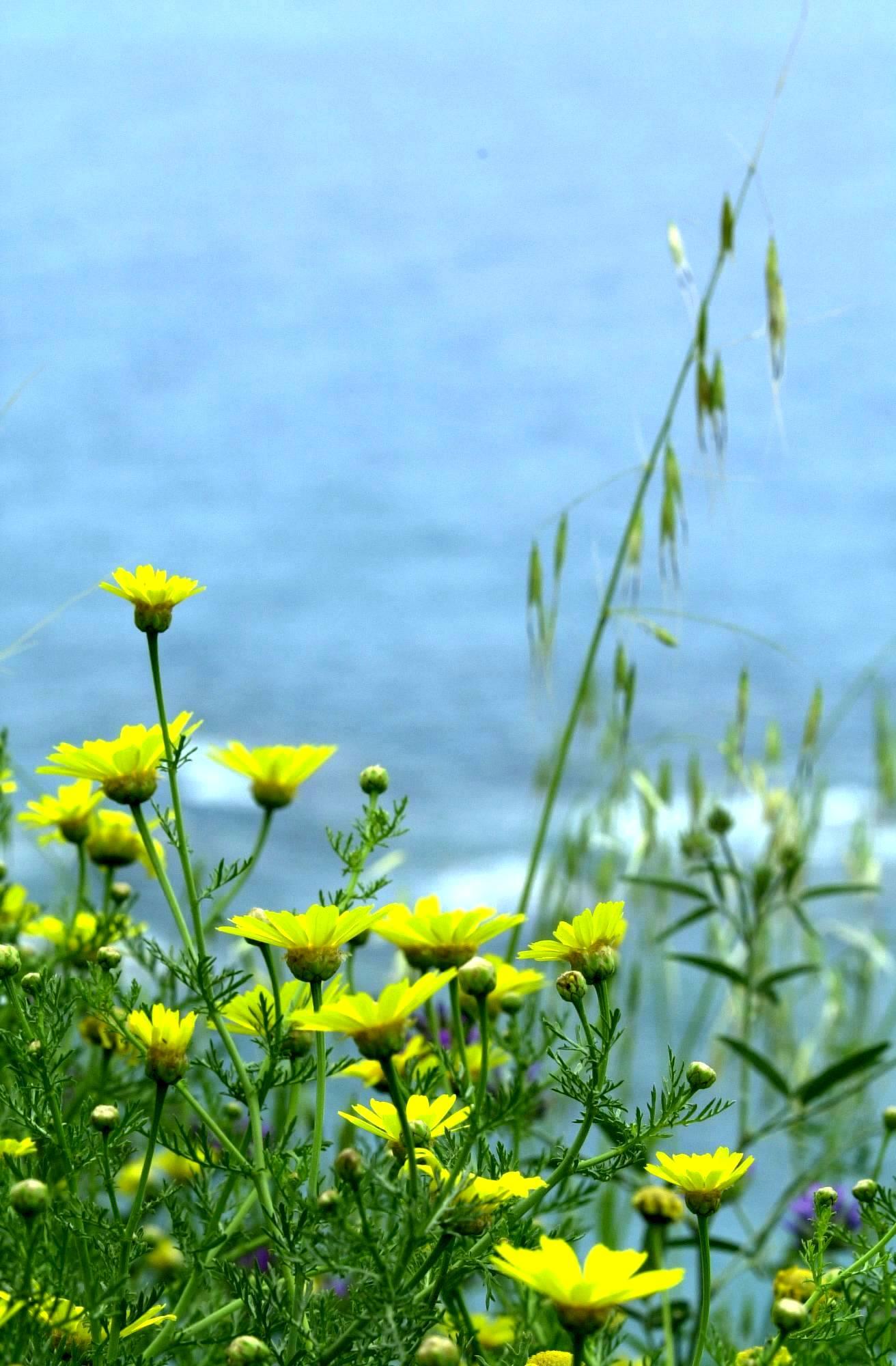 Flowers by seashore